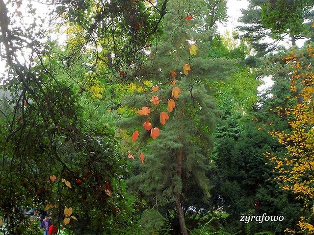 Ogrod Botaniczny 2012_04
