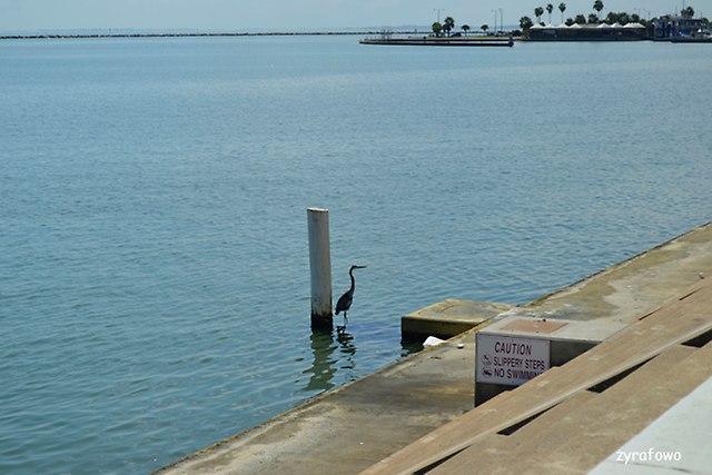 Corpus Christi 2014_25
