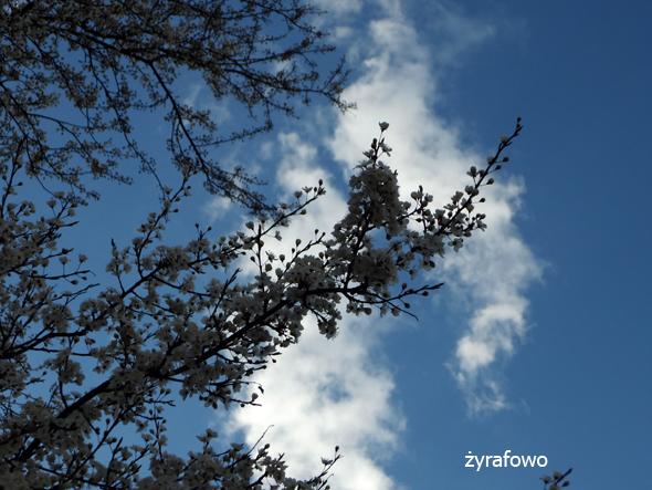 wiosna 2012_42