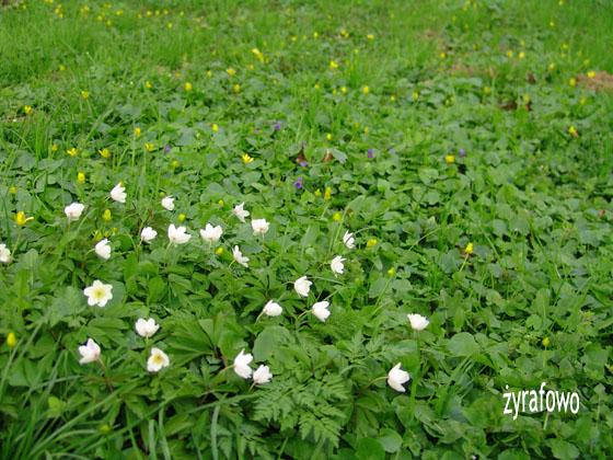 wiosna 2011_50