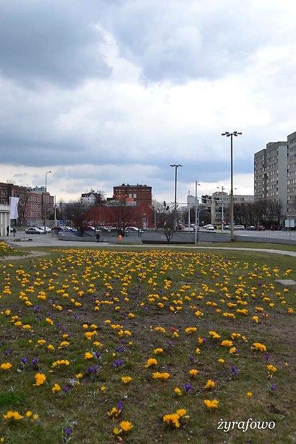 wiosna 2013_07
