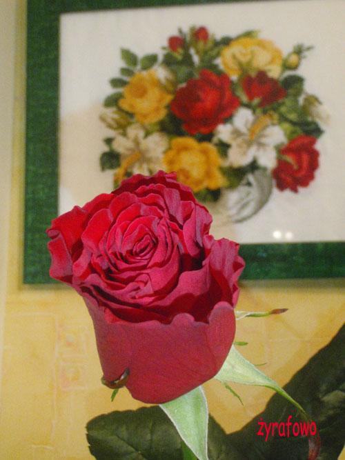 rocznicowa roza 02