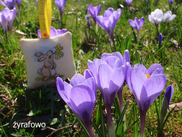 wiosna 2012_29