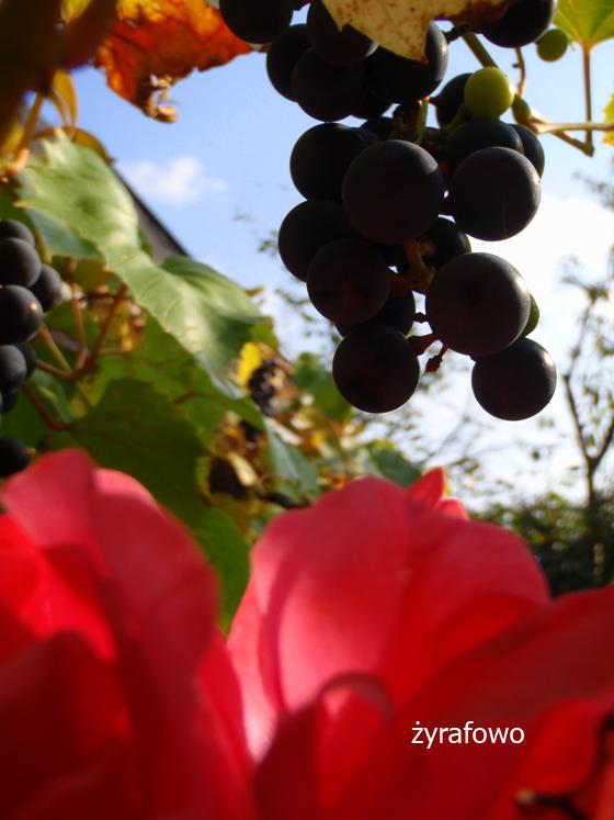 dzialka 2011_09