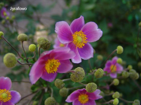 Ogrod Botaniczny 2011.08_02