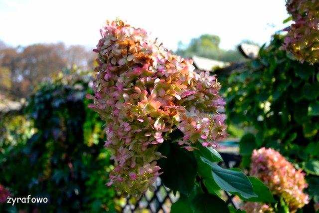 Ogrod Botaniczny 2014_32