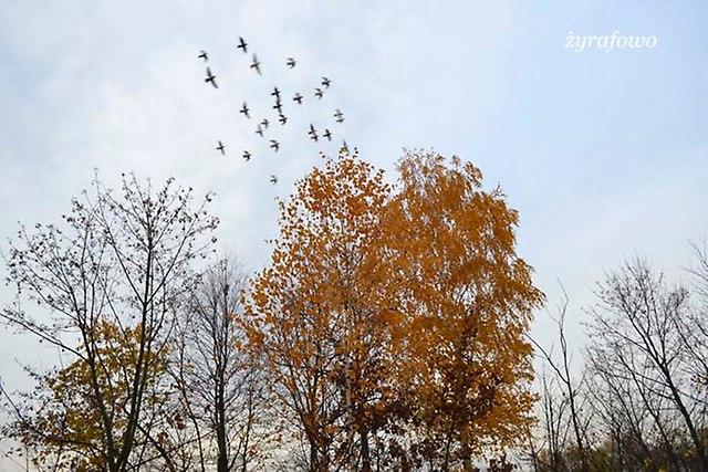 jesien 2012_236