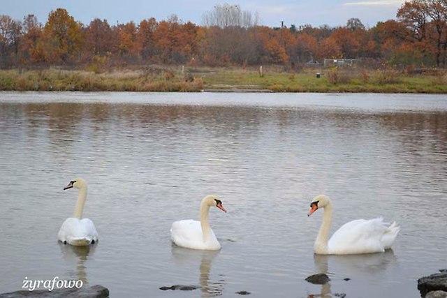 jesien 2012_257