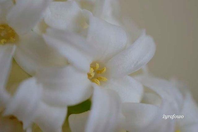 wiosennie_02