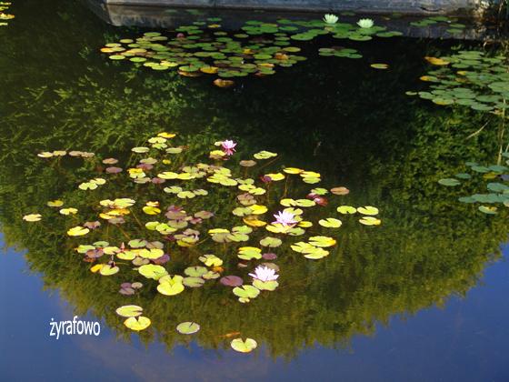 Ogrod Botaniczny 2011.08_11