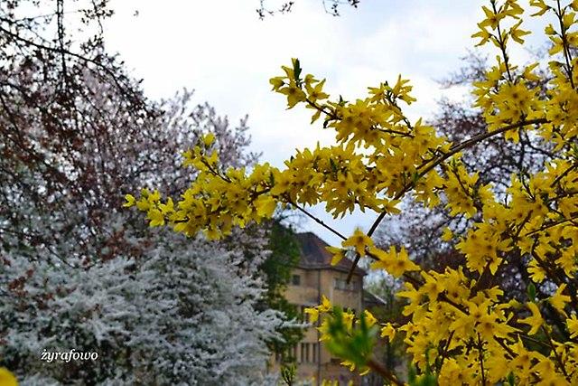 wiosna 2013_37