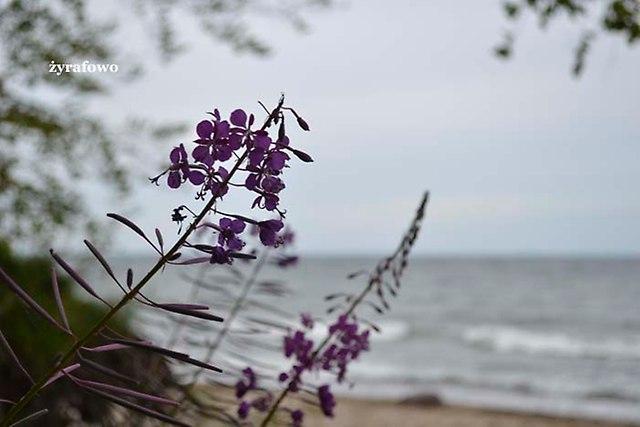 nad morzem_32