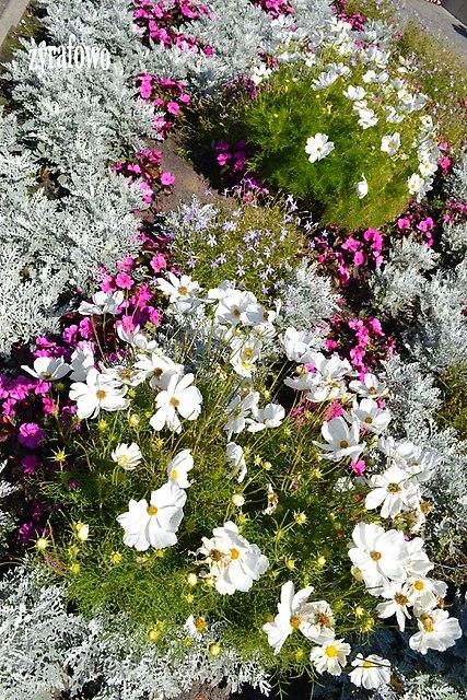 kwiaty 2012_33