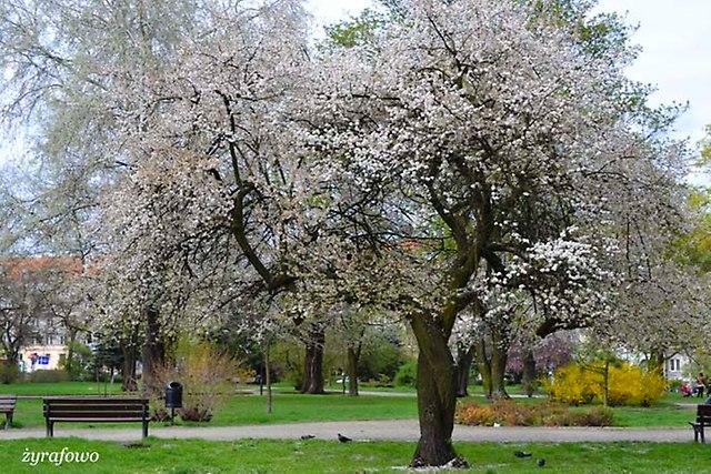 wiosna 2013_142