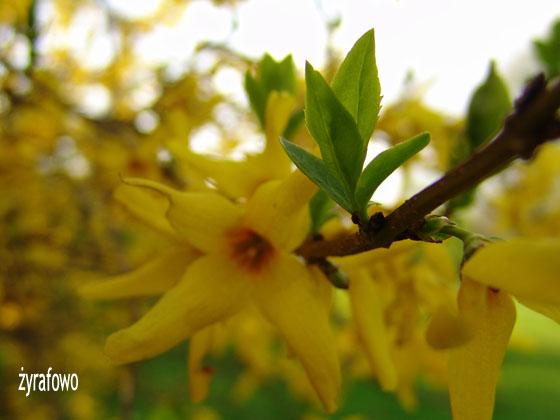 wiosna 2011_55