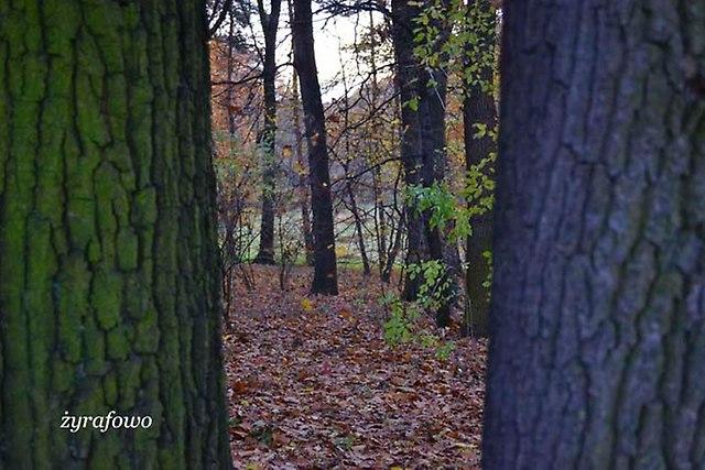 jesien 2012_219