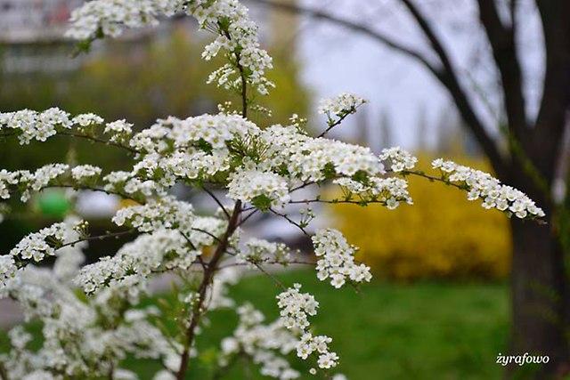 wiosna 2014_53