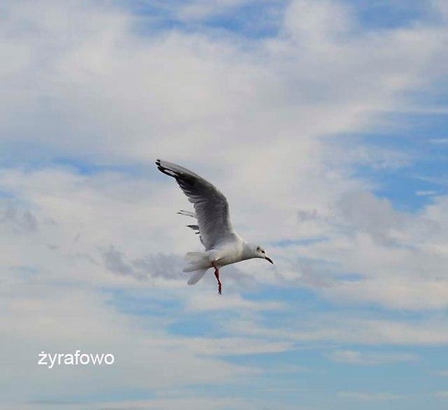 Gdynia_26