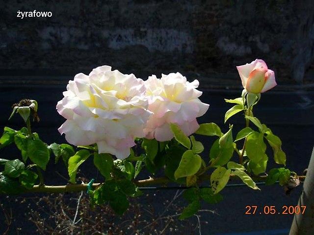 kwiaty_53