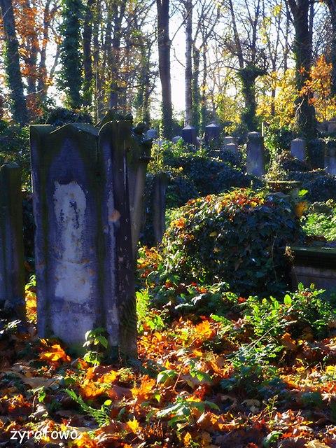Cmentarz Zydowski_22