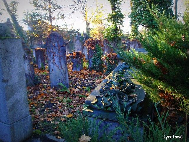 Cmentarz Zydowski_17
