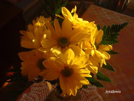 kwiaty_01