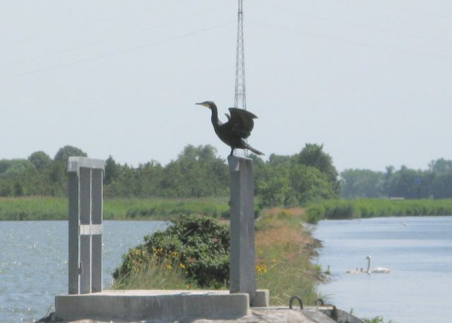 Ptasi Raj - kormoran