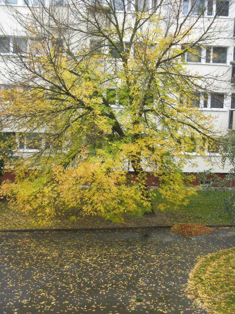Idzie jesień, nie ma na to rady
