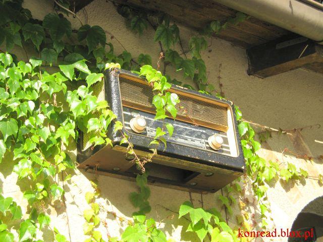 Głuchołazy - radio w zielonych pnączach przed kawiarnią Amorek