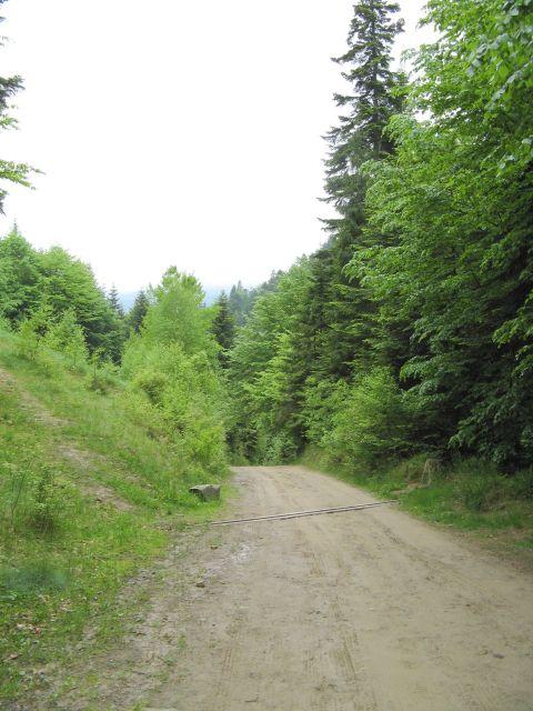 Stroma droga na Niemcową z Kosarzysk