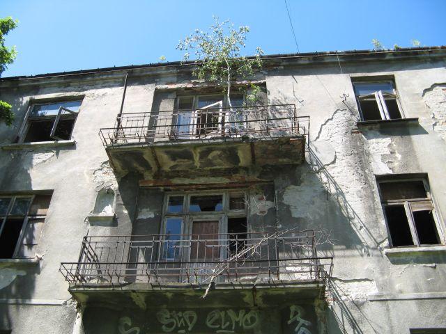 Żoliborz ul. Potocka - brzoza na balkonie