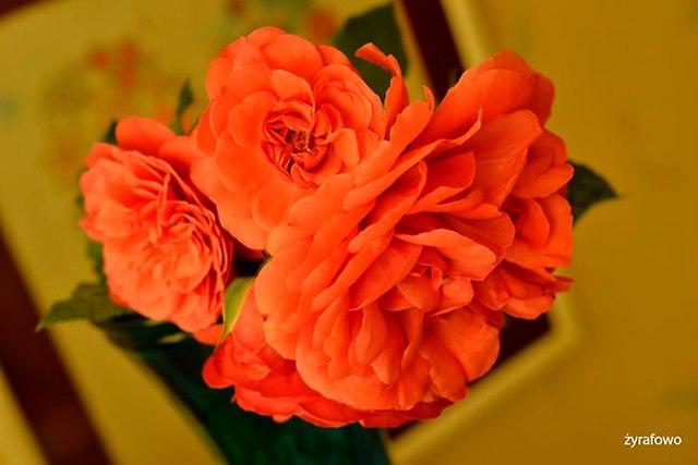 kwiaty 2016_02
