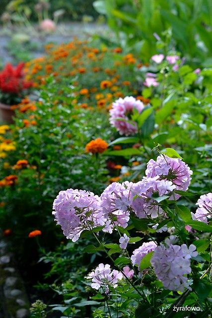 kwiaty 2016_04