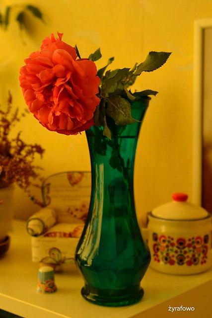 kwiaty 2016_03