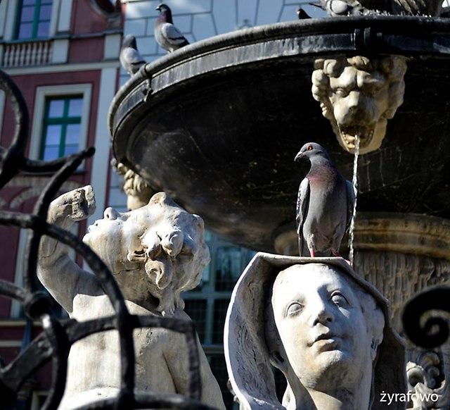 Gdansk 2016_31