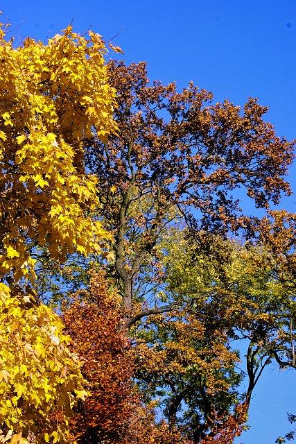 Jesien w Szczecinie 01