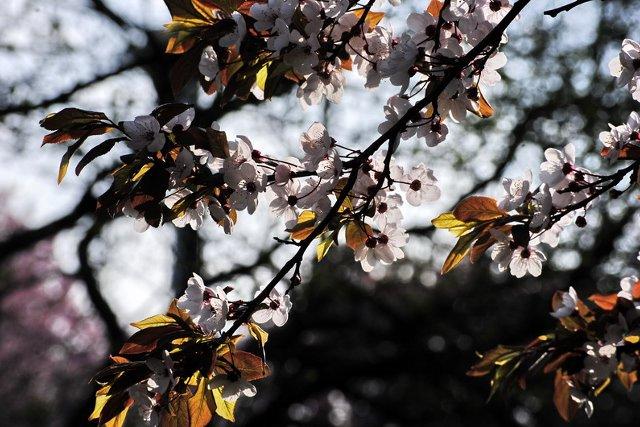 Wiosna w Szczecinie 05
