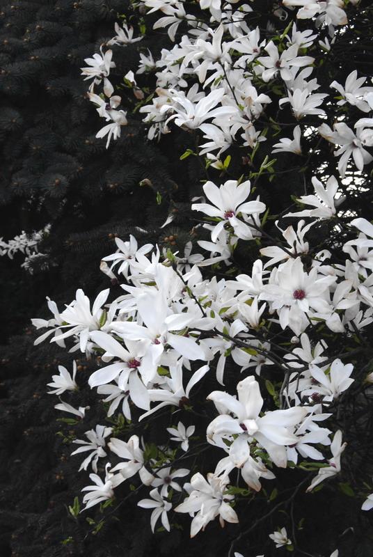 Wiosna w Szczecinie 02