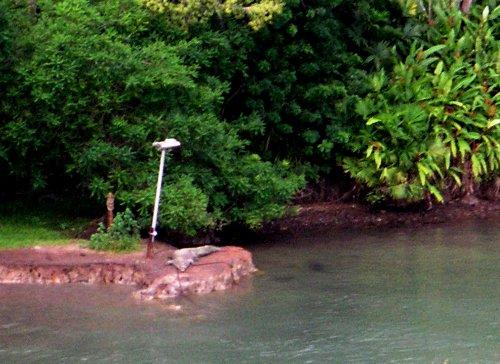 Panama cont. 057 aligator