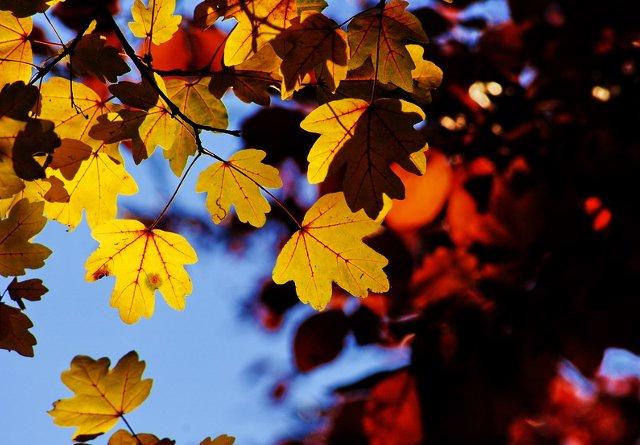 Jesien w Szczecinie 03