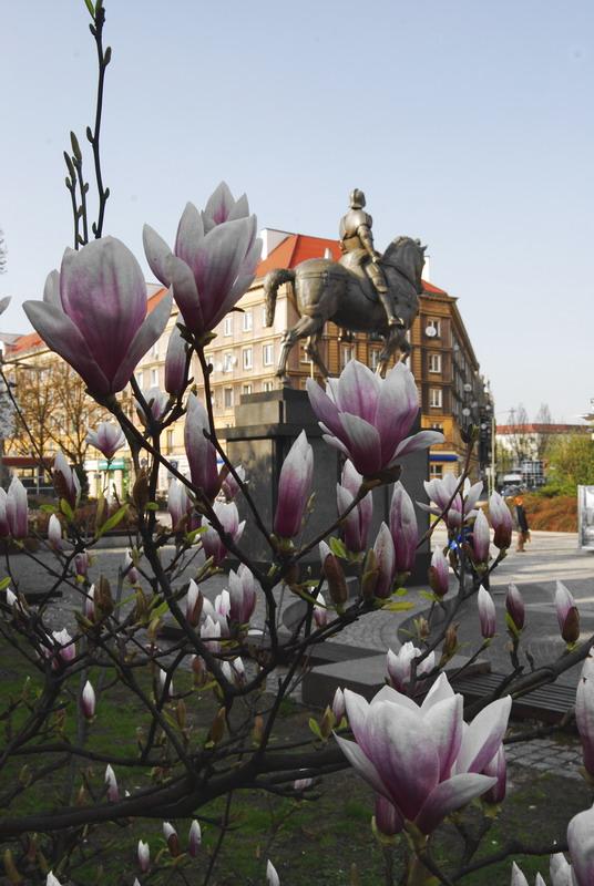 Wiosna w Szczecinie 01