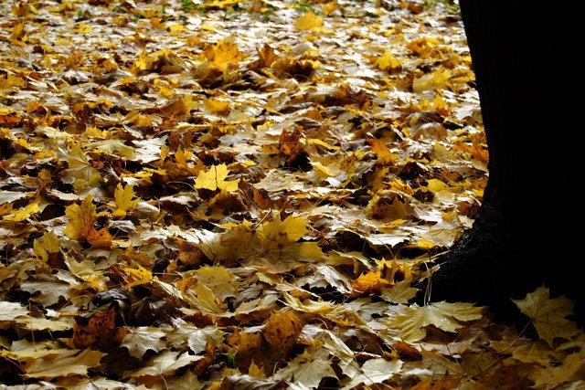 Jesien w Szczecinie 02