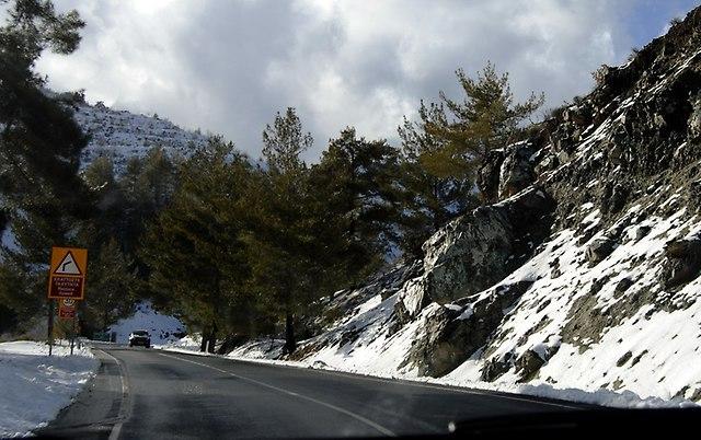 Cypr 116
