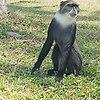 http://fotoforum.gazeta.pl/photo/9/sf/he/nft5/LZnlhqp9PioogYuolA.jpg