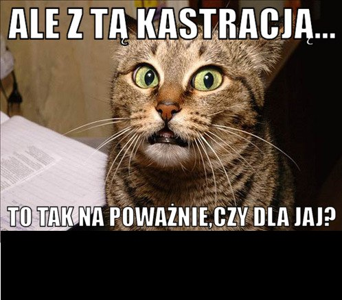https://fotoforum.gazeta.pl/photo/0/sc/pi/hae7/EL4O6iFJxBqUn2B4NB.jpg