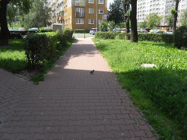 https://fotoforum.gazeta.pl/photo/1/rb/qa/wzpg/Q6z9SrdOt21ngaiWxB.jpg