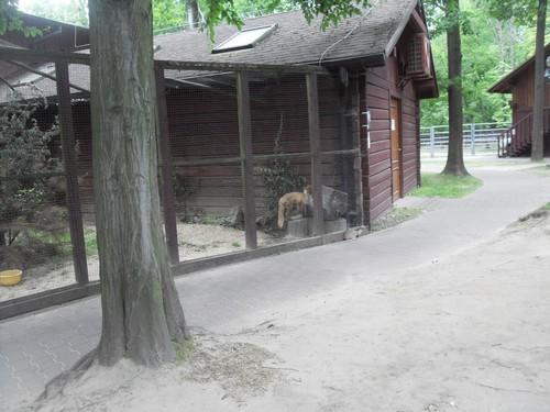 https://fotoforum.gazeta.pl/photo/3/wd/qa/jcow/9V7fIfDslD2TKBJbaX.jpg