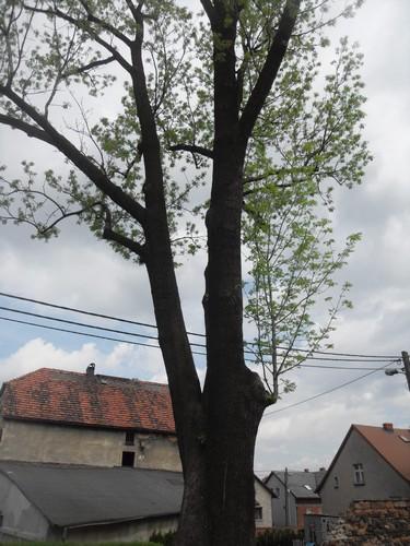https://fotoforum.gazeta.pl/photo/3/wd/qa/jcow/9WUaFJxIzHTEZ3yweX.jpg