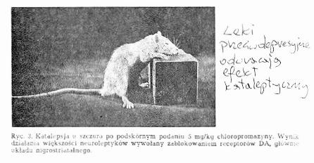 https://fotoforum.gazeta.pl/photo/5/hd/yc/ztxd/FJFA0G6iGmQ3FvZtEX.jpg