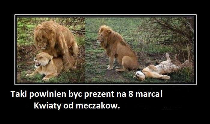 https://fotoforum.gazeta.pl/photo/5/pa/hf/j2ro/m7g6UYfN5fIzby7JbX.jpg
